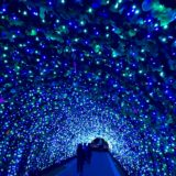 ゆりの里公園(福井県)イルミネーション2019-2020の期間は?口コミ/駐車場情報/混雑状況も