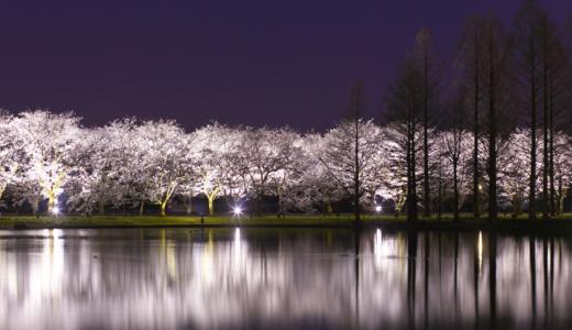 富山の桜スポット2020!富山県中央植物園の開花や見頃はいつ?見所や口コミも!