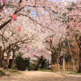 富山の桜スポット2020!高岡古城公園の開花や見頃はいつ?見所や口コミも!