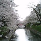 富山の桜スポット2020!松川公園の開花や見頃はいつ?見所や口コミも!