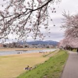 金沢の桜スポット2020!犀川緑地公園の開花や見頃はいつ?見所や口コミも!