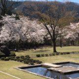 石川県農林総合研究センター2020桜の開花や見頃はいつ?見所や口コミも!