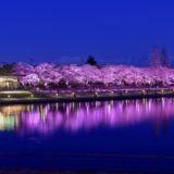 富山の桜スポット2020!富岩運河環水公園の開花や見頃はいつ?見所や口コミも!