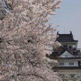 富山の桜スポット2020!富山城址公園の開花や見頃はいつ?見所や口コミも!